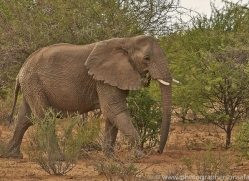 elephant-copyright-photographers-on-safari-com-6824