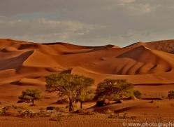 sossusvlei-copyright-photographers-on-safari-com-6771