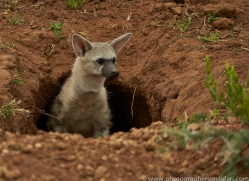 aardwolf-copyright-photographers-on-safari-com-7027