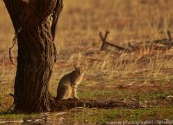 african-wildcat-copyright-photographers-on-safari-com-7029