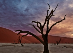 deadvlei-copyright-photographers-on-safari-com-6740