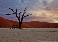deadvlei-copyright-photographers-on-safari-com-6741