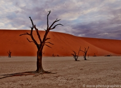 deadvlei-copyright-photographers-on-safari-com-6745