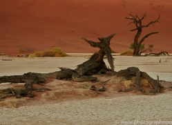 deadvlei-copyright-photographers-on-safari-com-6752