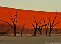 deadvlei-copyright-photographers-on-safari-com-6754