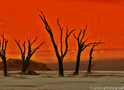 deadvlei-copyright-photographers-on-safari-com-6756
