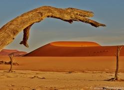 deadvlei-copyright-photographers-on-safari-com-6765