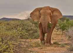 elephant-copyright-photographers-on-safari-com-6830