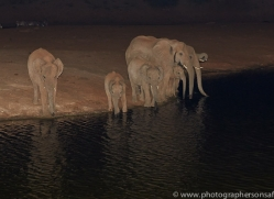 elephant-copyright-photographers-on-safari-com-6833
