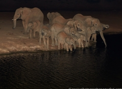 elephant-copyright-photographers-on-safari-com-6834