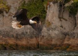 bald-eagle-alasaka-4628-copyright-photographers-on-safari