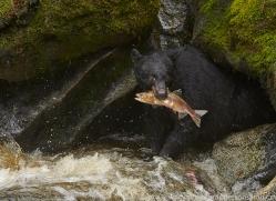 Black Bear 2014-1copyright-photographers-on-safari-com