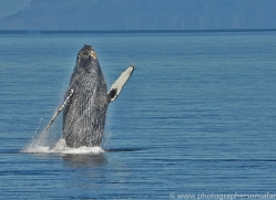 Whales 2014-11copyright-photographers-on-safari-com