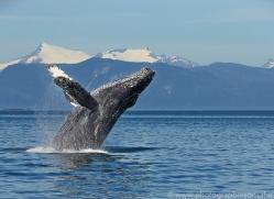 Whales 2014-18copyright-photographers-on-safari-com
