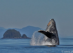 Whales 2014-1copyright-photographers-on-safari-com