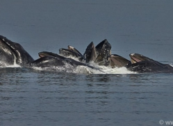 Whales 2014-25copyright-photographers-on-safari-com