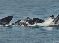 Whales 2014-27copyright-photographers-on-safari-com