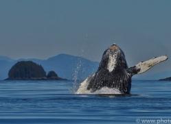 Whales 2014-2copyright-photographers-on-safari-com