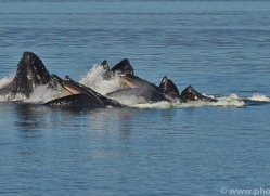 Whales 2014-30copyright-photographers-on-safari-com