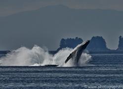 Whales 2014-31copyright-photographers-on-safari-com