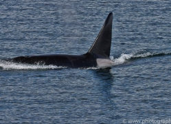 Whales 2014-34copyright-photographers-on-safari-com