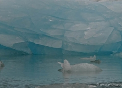 iceberg-alasaka-4701-copyright-photographers-on-safari