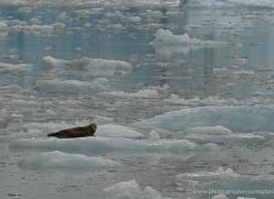 seal-inside-passage-alasaka-4785-copyright-photographers-on-safari
