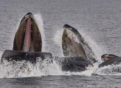humpback-whales-copyright-photographers-on-safari-com-7742