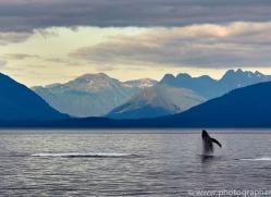humpback-whales-copyright-photographers-on-safari-com-7756