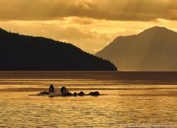 humpback-whales-copyright-photographers-on-safari-com-7754