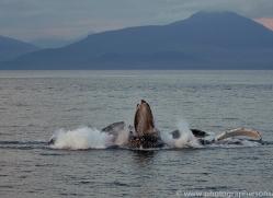 humpback-whales-copyright-photographers-on-safari-com-7749