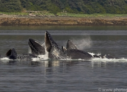 humpback-whales-copyright-photographers-on-safari-com-7757
