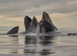 humpback-whales-copyright-photographers-on-safari-com-7761