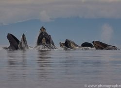 humpback-whales-copyright-photographers-on-safari-com-7763