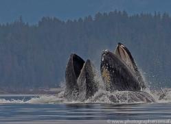 humpback-whales-copyright-photographers-on-safari-com-7765