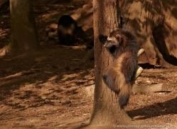 wolverine-5507-copyright-photographers-on-safari-com