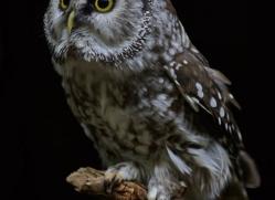 owl-5553-copyright-photographers-on-safari-com