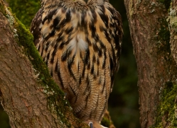 Eagle Owl 2014-13copyright-photographers-on-safari-com