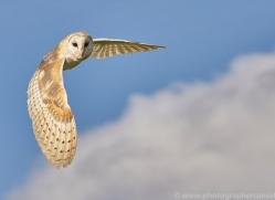 barn-owl-copyright-photographers-on-safari-com-8260