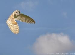 barn-owl-copyright-photographers-on-safari-com-8266