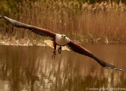 fish-eagle-copyright-photographers-on-safari-com-8285