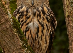Eagle Owl 2014-12copyright-photographers-on-safari-com