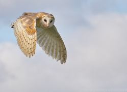 barn-owl-copyright-photographers-on-safari-com-8259