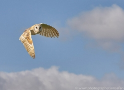 barn-owl-copyright-photographers-on-safari-com-8262