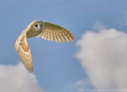 barn-owl-copyright-photographers-on-safari-com-8264