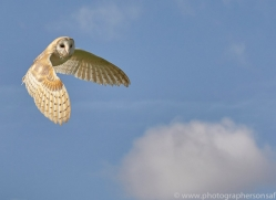barn-owl-copyright-photographers-on-safari-com-8266