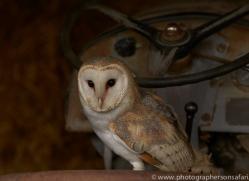 barn-owl-copyright-photographers-on-safari-com-8269