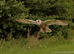 long-eared-owl-568-bedford-copyright-photographers-on-safari-com