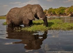 african-elephant-4462-botswana-copyright-photographers-on-safari