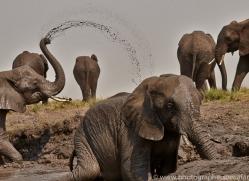 Elephant 2014-11copyright-photographers-on-safari-com